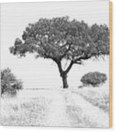 Marula Tree Wood Print