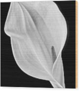 Marvelous Calla Lily In Black And White Wood Print