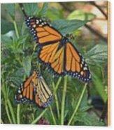 Marvelous Monarchs Wood Print