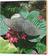 Marvelous Moth Wood Print