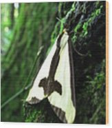 Maryland Clymene Moth Wood Print