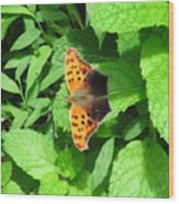Maryland Eastern Comma Wood Print