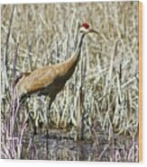 Marys Heron Wood Print