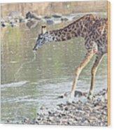 Masai Giraffe Drinking Wood Print