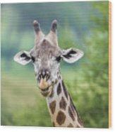 Masai Giraffe Portrait Wood Print