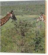 Masai Mara Giraffe Wood Print