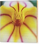 Masdevallia Orchid Wood Print