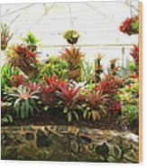 Massed Bromeliad In Hothouse Wood Print