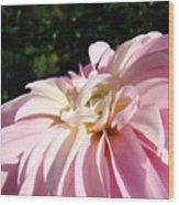 Master Gardener Pink Dahlia Flower Garden Art Prints Canvas Baslee Troutman Wood Print