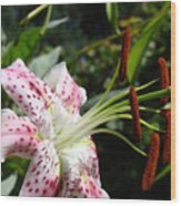 Master Gardeners Art Floral Pink Lily Flower Baslee Troutman Wood Print