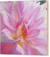 Master Gardeners Pink Dahlias Art Prints Baslee Troutman Wood Print