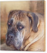 Mastiff Portrait Wood Print by Carol Cavalaris