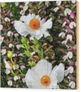 Matilija Poppies Wood Print