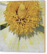 Matilija Poppy 2- Macro Wood Print