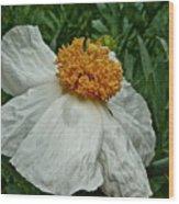 Matilija Poppy Four Wood Print
