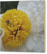Matilija Poppy Wood Print