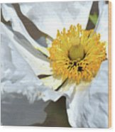 Matilija Poppy-macro Wood Print