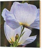 Matilija Poppy Wood Print