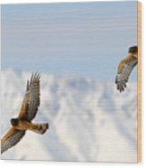 Mating Pair Harrier Hawks Wood Print