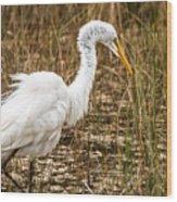 Mating Season - Everglades Wood Print