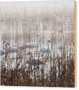 Mattamuskeet Hideaway Wood Print