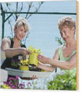Mature Gardener Helps Senior Client With Flowers Wood Print