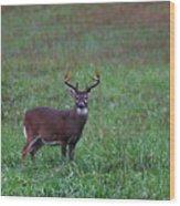 Mature Whitetail Buck Wood Print