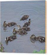 Maturing Ducklings Wood Print
