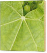 Maturing Wine Grapes Wood Print by Gaspar Avila