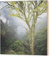 Maui Moss Tree Wood Print