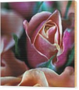 Mauve And Peach Roses Wood Print by Kathy Yates