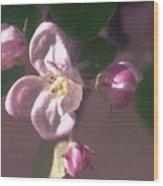 Mauve Blossom Wood Print