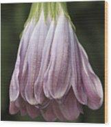 Mauve Dangle Wood Print