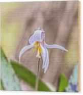Mauve Trout Lily Wood Print