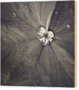 May 11 2010 Wood Print