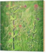 May 13 2010 Wood Print