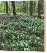 May 19-2017 At Sunnydale Park  Wood Print