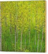 May 25 2010 Wood Print