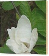 May Wood Print