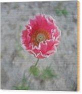 May   Flower  Wood Print