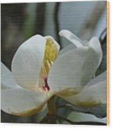 May Magnolia 2 Wood Print