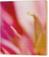 May Pink Wood Print