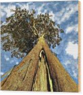 Mayflies On The Eucalyptus Viminalis Wood Print