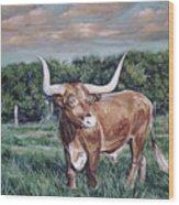 Mays Longhorn Wood Print