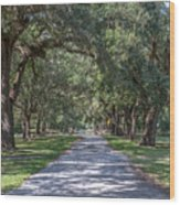 Mcleod Allee Wood Print