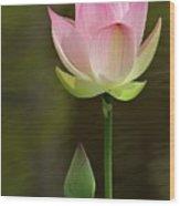 Pink Lotus And A Bud Wood Print