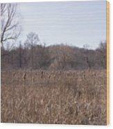 Meadow At Arnold Arboretum Wood Print