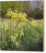 Meadow Cowslip Wood Print