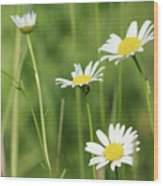 Meadow Detail White Wild Flowers Wood Print