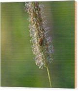 Meadow Foxtail Wood Print